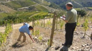 Miles showing Charles the vineyards at Cavadinha