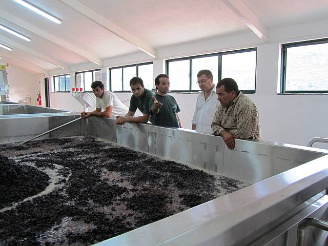 Over the course of the day as grapes arrive, the lagar slowly fills up to 11,000 kg capacity