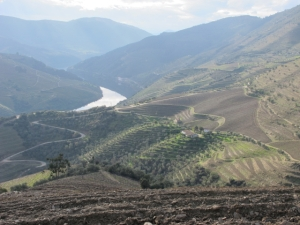 Vineyards on western side of Malvedos now under organic management