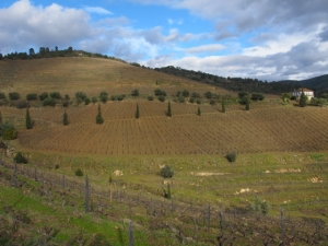 Vertically planted vineyards on eastern side of Malvedos for organic management