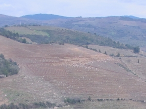 Landscaping to replant northwestern parcels of Quinta dos Malvedos