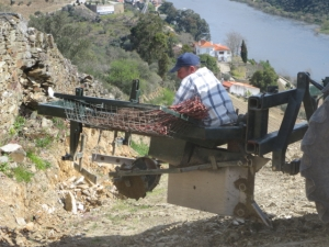 The vineyard planting trailer designed by Symington