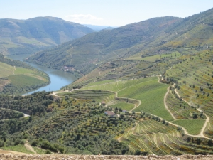 The vertical vineyards at the western end of Quinta dos Malvedos