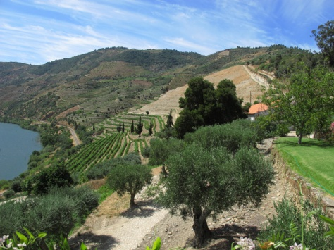 The Touriga Franca vineyard to the west of the caseiro's (caretaker's) house at Malvedos.