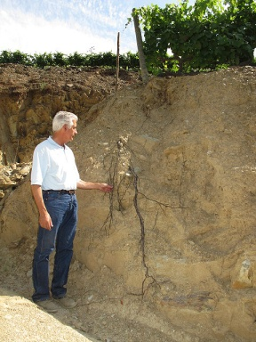 Alexandre Mariz points out the roots of a vine, revealed by a partially collapsed terrace. Note the lateral ramification to the right.
