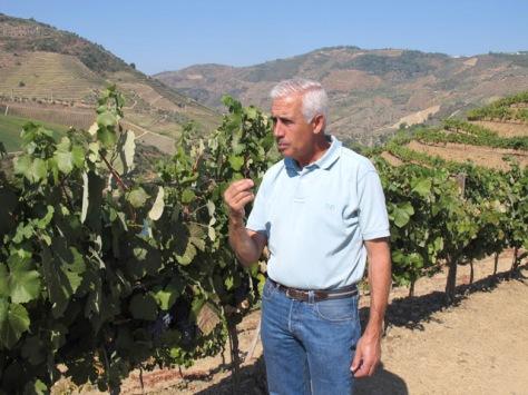 Alexandre samples a Touriga Nacional berry at Quinta do Tua, August 30th