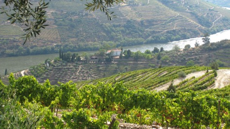 Quinta dos Malvedos: the house perched on the characteristic ridge.