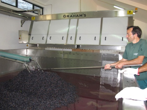 Fonseca, one of Henry's trusted winery hands collects a sample of juice from the first lagar being filled this morning.