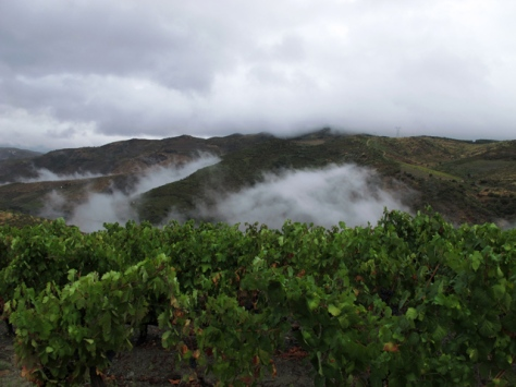 A visual representation of the Douro weather of the last few days; damp and wet.