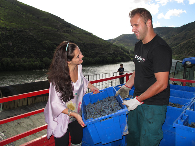 Sancha Trindade, helps Juca (or is the other way around) unload a trailer-load of grapes at the winery.