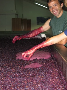 A lagar with fermenting must from one of the Síbio blocks; the colour is impressive, hence Fonseca's broad smile.