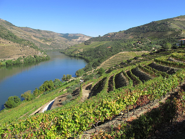 The magnificent scenery of the Douro Valley; here the landsacpe at Quinta da Vila Velha.