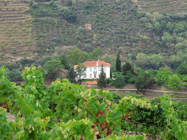 The Quinta dos Malvedos house, viewed from the vineyards, high up behind the building.