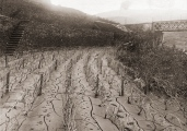 Malvedos vineyards after the 1909 flood