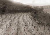 The 'Port Arthur' Stone Terraces vineyard at Malvedos in the aftermath of the 1909 flood.