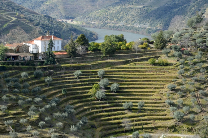 February 6th 2014 – The Stone Terraces at Quinta dos Malvedos