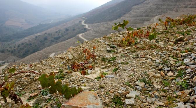 The new Touriga Nacional plantings at Graham's Vale de Malhadas