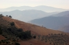 Establishing new vineyards on the steep mountainsides of the Douro is a long and difficult process.