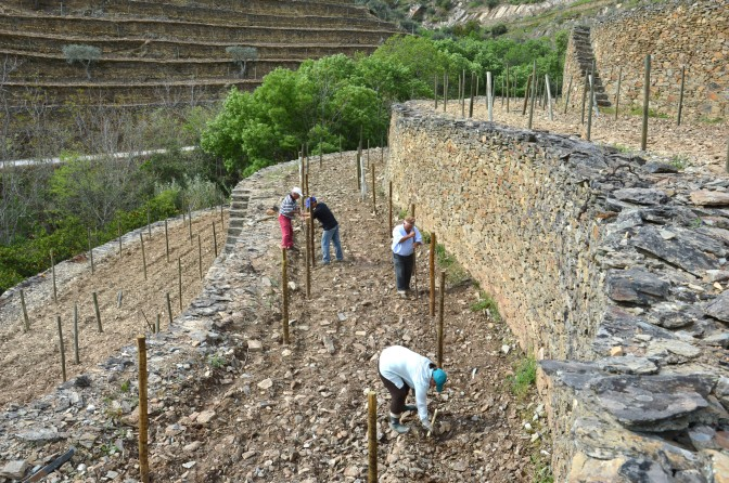 The lower stone terraces next to the Síbio stream being planted in the spring.