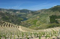 The view from the new Sousão vineyards at Malvedos