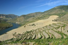 The new vineyard taking shape at the western extremity of Malvedos.