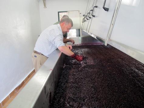 1st MC lagar fermenting