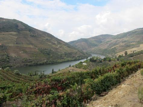 Quinta dos Malvedos looking towards the West.