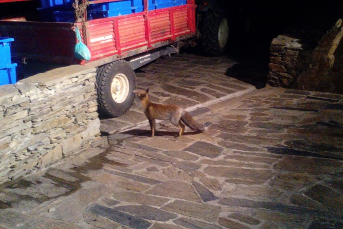 THE 2014 DOURO HARVEST: THE YEAR OF THE FOX
