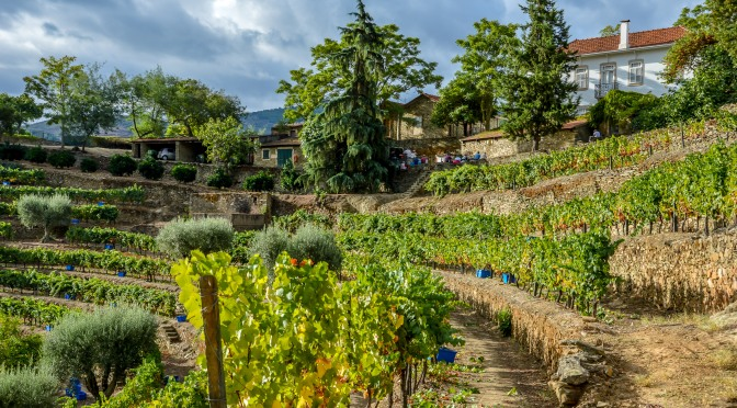 THE STONE TERRACES HARVESTED AT QUINTA DOS MALVEDOS