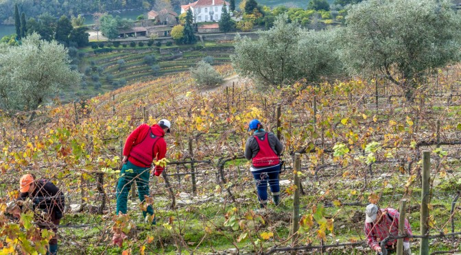 A Year in the Vineyards: Part 1