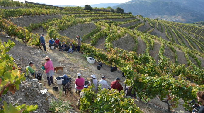 A YEAR IN THE VINEYARDS – PART 8